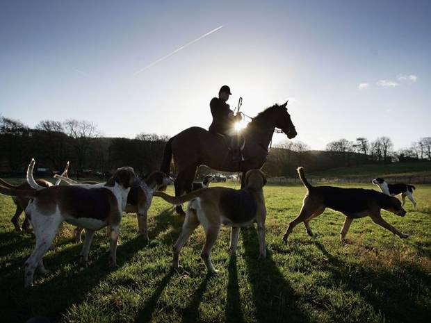 the fox hunting essay Fox hunting should be banned as, not only is it cruel towards theanimal your hunting but it's also dangerous to the dogs and horseswhich people.